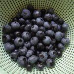 ブルーベリーの収穫・夏剪定・挿し木