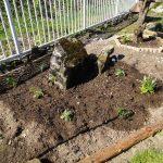 宿根草花壇始めました